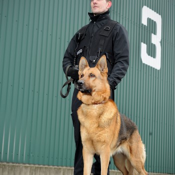 A Ministry of Defence Guard Service (MGS) dog handler and his charge are pictured at work on the Army Air Corps station at Middle Wallop.  *Model release held by photographer*